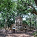 Baynard Plantation Ruins View