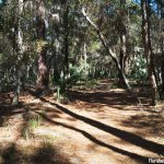 Bulow Creek State Park Forest