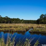 Bulow Creek State Park Scenery
