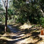 Bulow Creek State Park Trail
